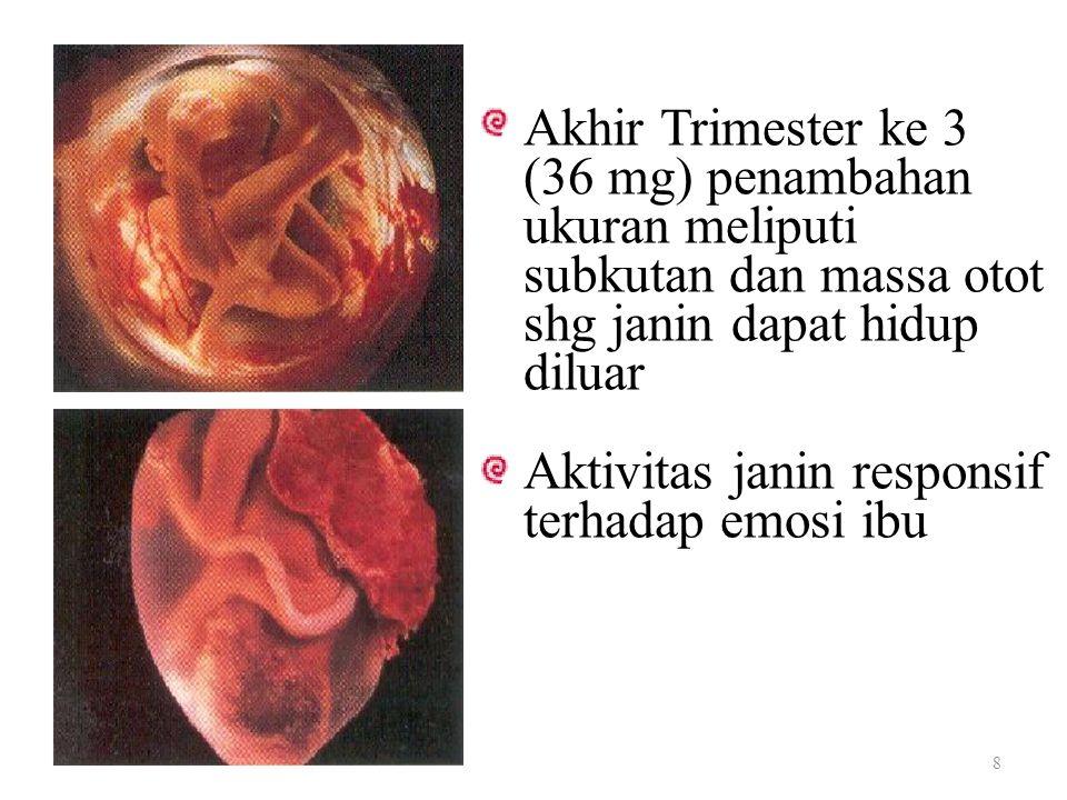 Akhir Trimester ke 3 (36 mg) penambahan ukuran meliputi subkutan dan massa otot shg janin dapat hidup diluar Aktivitas janin responsif terhadap emosi