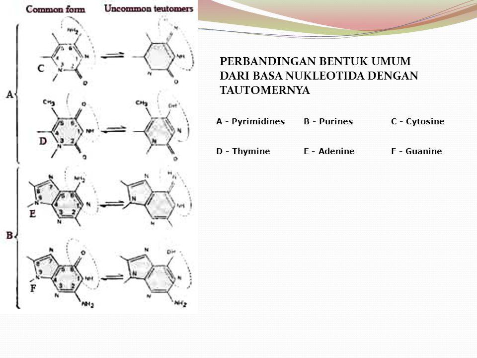 PERBANDINGAN BENTUK UMUM DARI BASA NUKLEOTIDA DENGAN TAUTOMERNYA A - PyrimidinesB - PurinesC - Cytosine D - ThymineE - AdenineF - Guanine