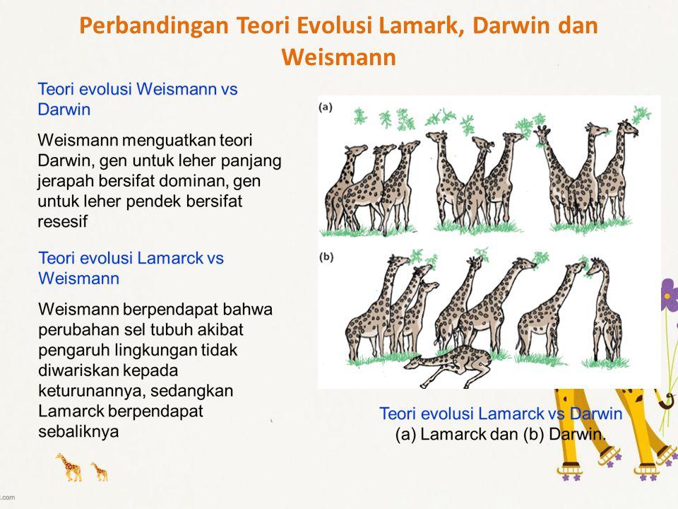 Perbandingan Teori Evolusi Lamark, Darwin dan Weismann