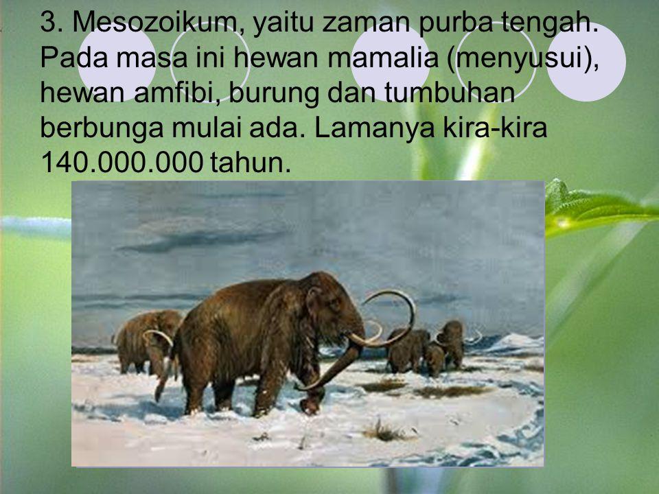 3. Mesozoikum, yaitu zaman purba tengah. Pada masa ini hewan mamalia (menyusui), hewan amfibi, burung dan tumbuhan berbunga mulai ada. Lamanya kira-ki