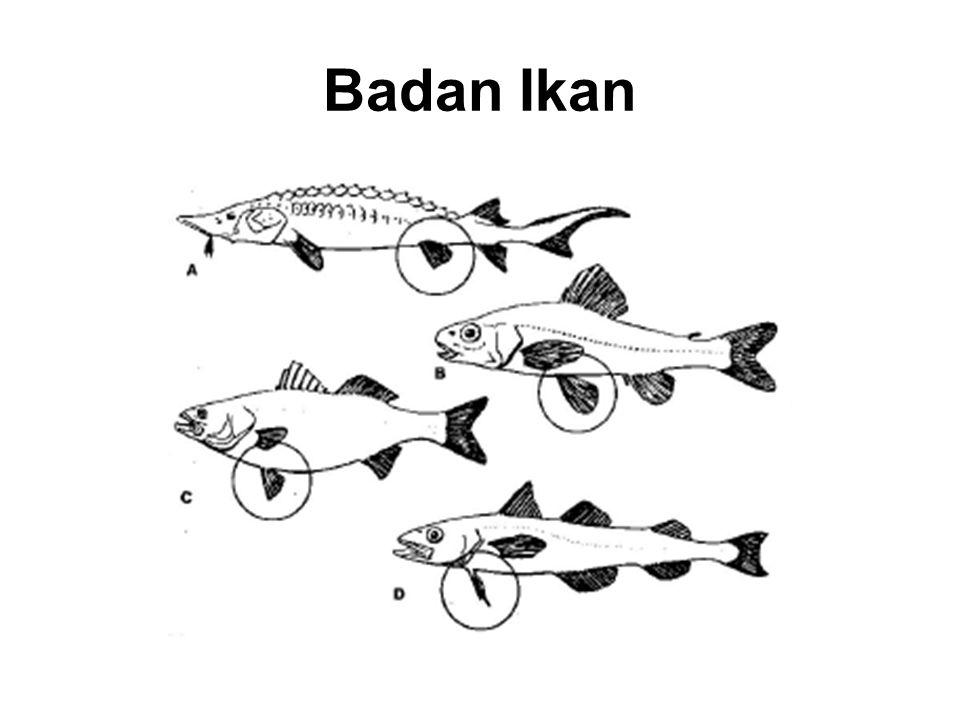 Badan Ikan