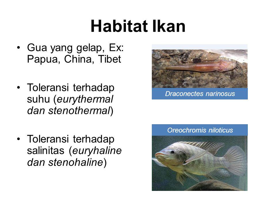 Gua yang gelap, Ex: Papua, China, Tibet Toleransi terhadap suhu (eurythermal dan stenothermal) Toleransi terhadap salinitas (euryhaline dan stenohaline) Draconectes narinosus Oreochromis niloticus