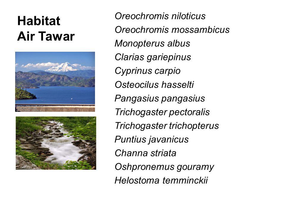 Habitat Air Tawar Oreochromis niloticus Oreochromis mossambicus Monopterus albus Clarias gariepinus Cyprinus carpio Osteocilus hasselti Pangasius pang