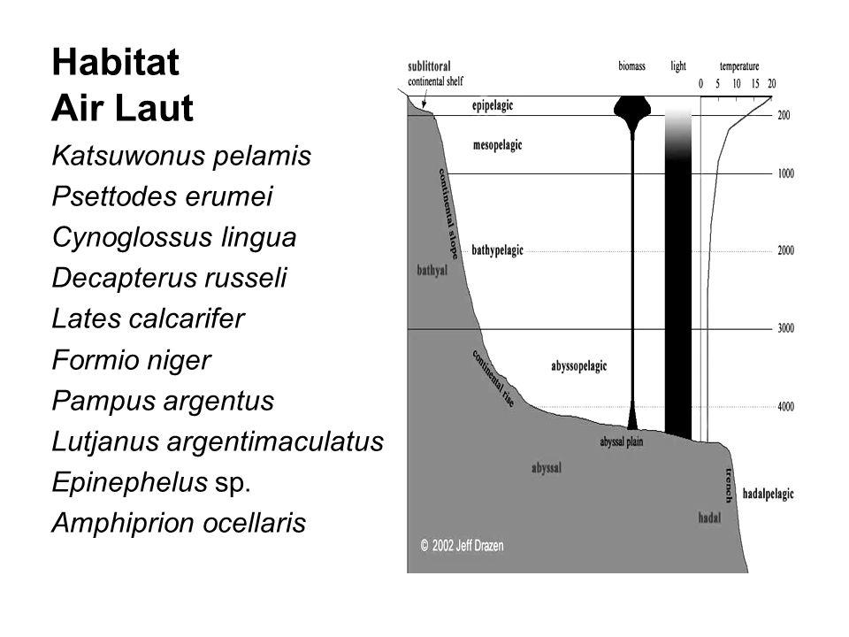 Habitat Air Laut Katsuwonus pelamis Psettodes erumei Cynoglossus lingua Decapterus russeli Lates calcarifer Formio niger Pampus argentus Lutjanus argentimaculatus Epinephelus sp.