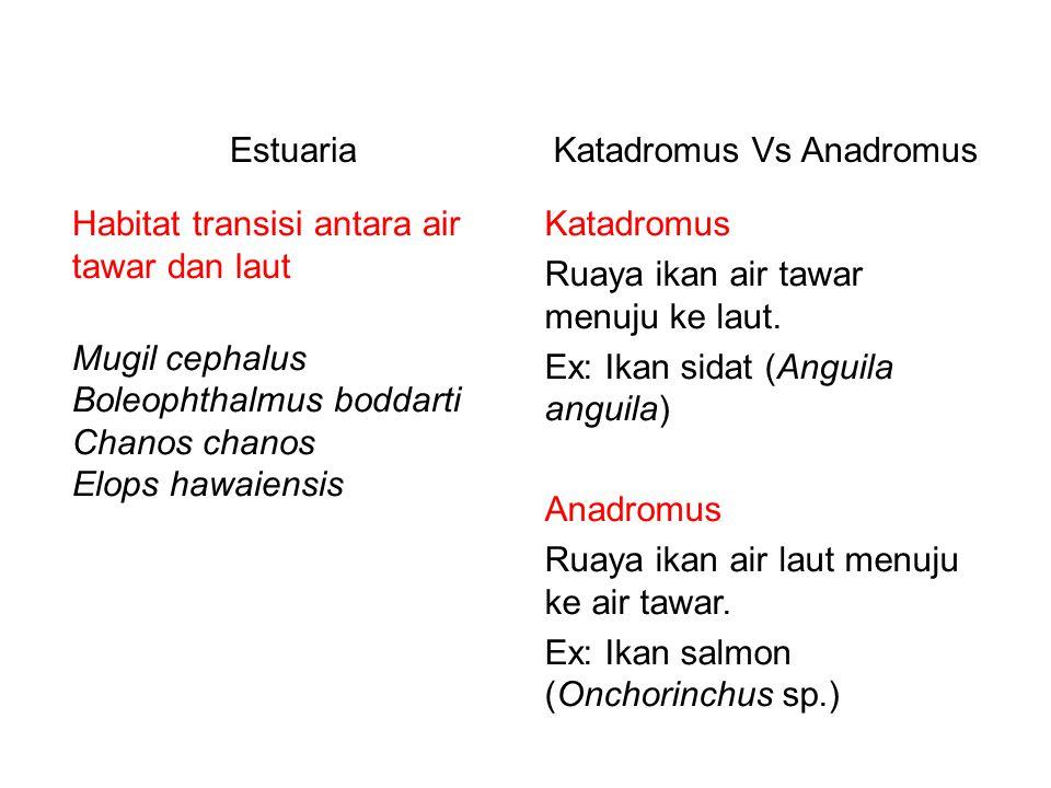 Katadromus Vs Anadromus Katadromus Ruaya ikan air tawar menuju ke laut. Ex: Ikan sidat (Anguila anguila) Anadromus Ruaya ikan air laut menuju ke air t