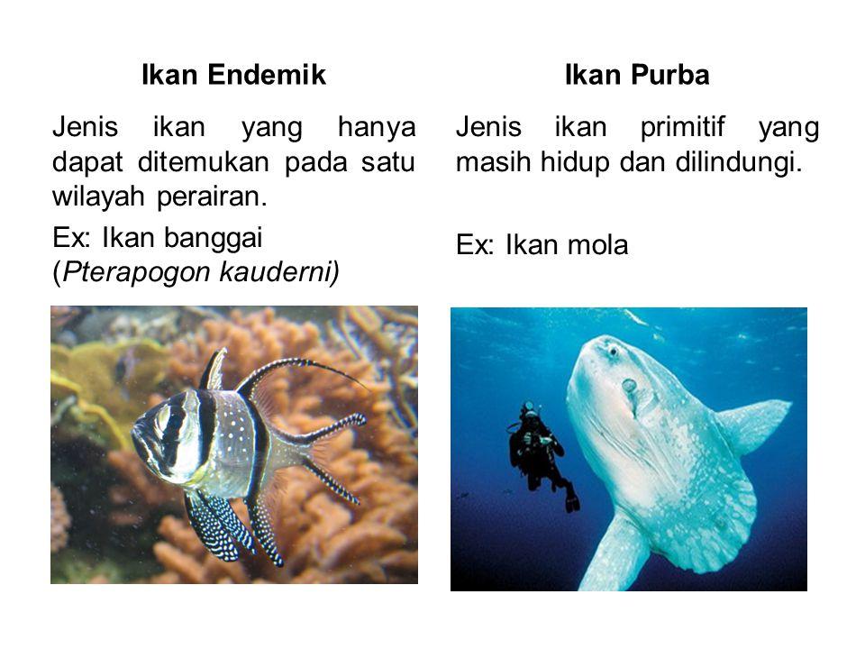 Ikan Endemik Jenis ikan yang hanya dapat ditemukan pada satu wilayah perairan. Ex: Ikan banggai (Pterapogon kauderni) Ikan Purba Jenis ikan primitif y