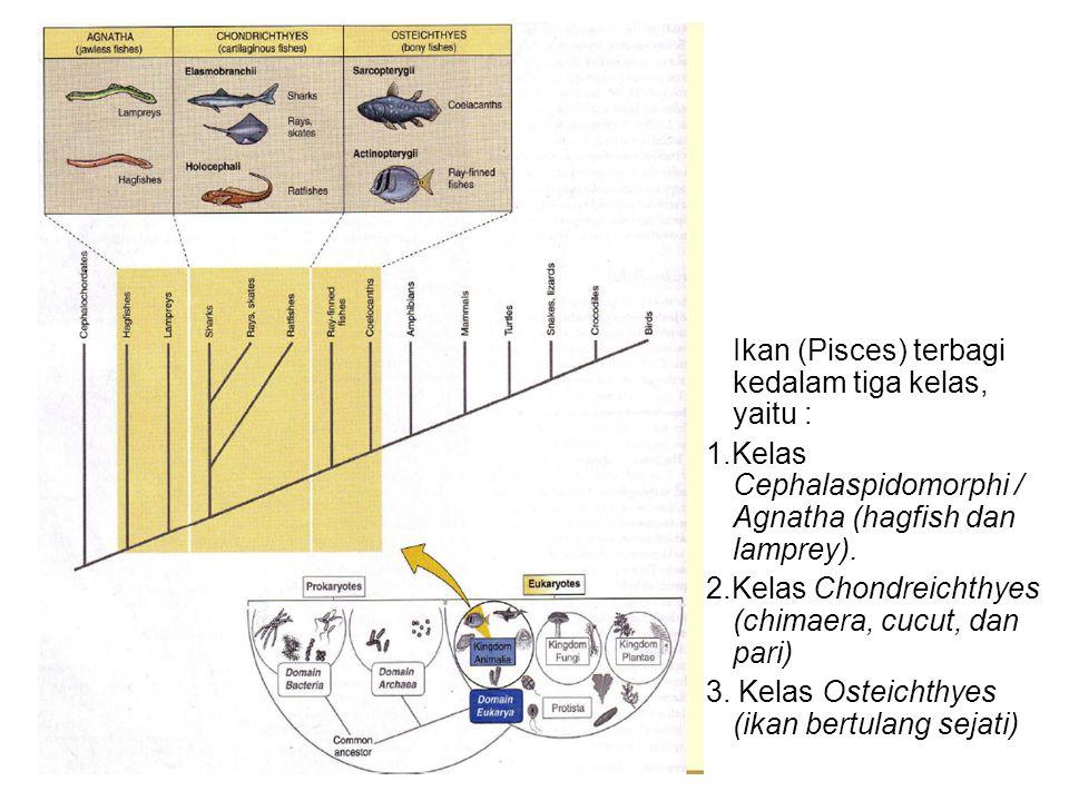 Ikan (Pisces) terbagi kedalam tiga kelas, yaitu : 1.Kelas Cephalaspidomorphi / Agnatha (hagfish dan lamprey). 2.Kelas Chondreichthyes (chimaera, cucut