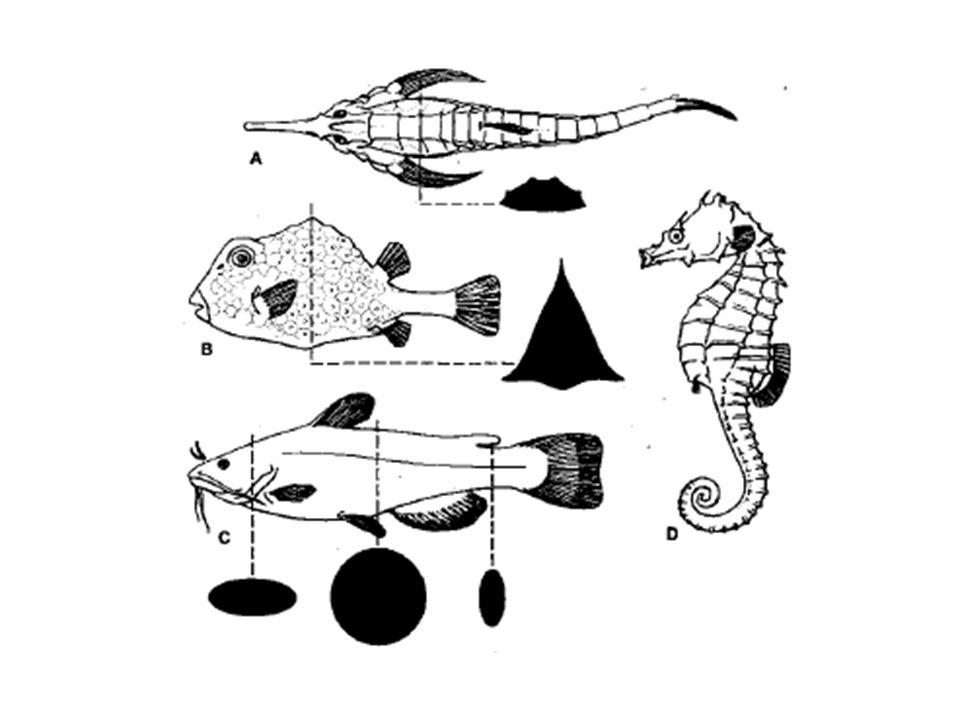 Ikan MasIkan Kuwe Sea Dragon Ikan Daun