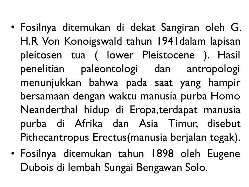 Fosilnya ditemukan di dekat Sangiran oleh G. H.R Von Konoigswald tahun 1941dalam lapisan pleitosen tua ( lower Pleistocene ). Hasil penelitian paleont