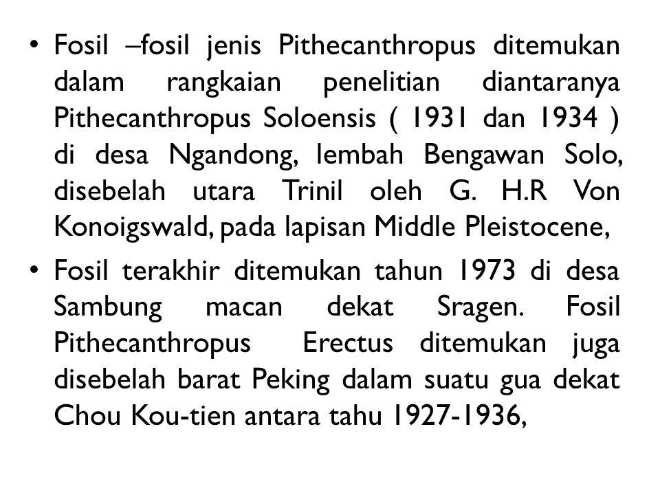Fosil –fosil jenis Pithecanthropus ditemukan dalam rangkaian penelitian diantaranya Pithecanthropus Soloensis ( 1931 dan 1934 ) di desa Ngandong, lemb
