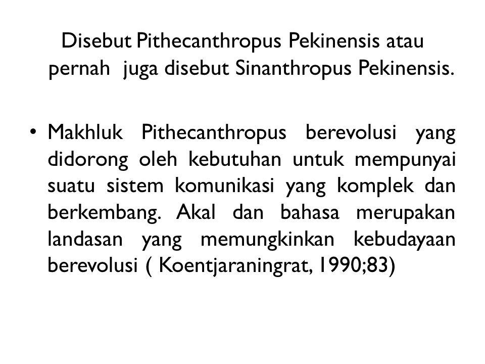 Disebut Pithecanthropus Pekinensis atau pernah juga disebut Sinanthropus Pekinensis. Makhluk Pithecanthropus berevolusi yang didorong oleh kebutuhan u
