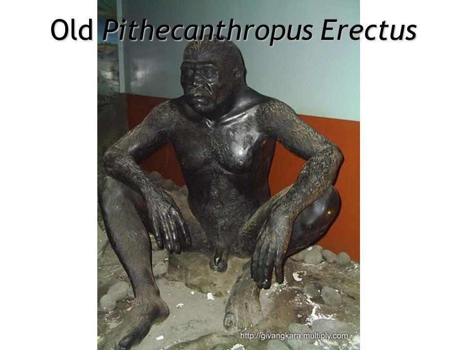 Mrs. Pithecanthropus Erectus