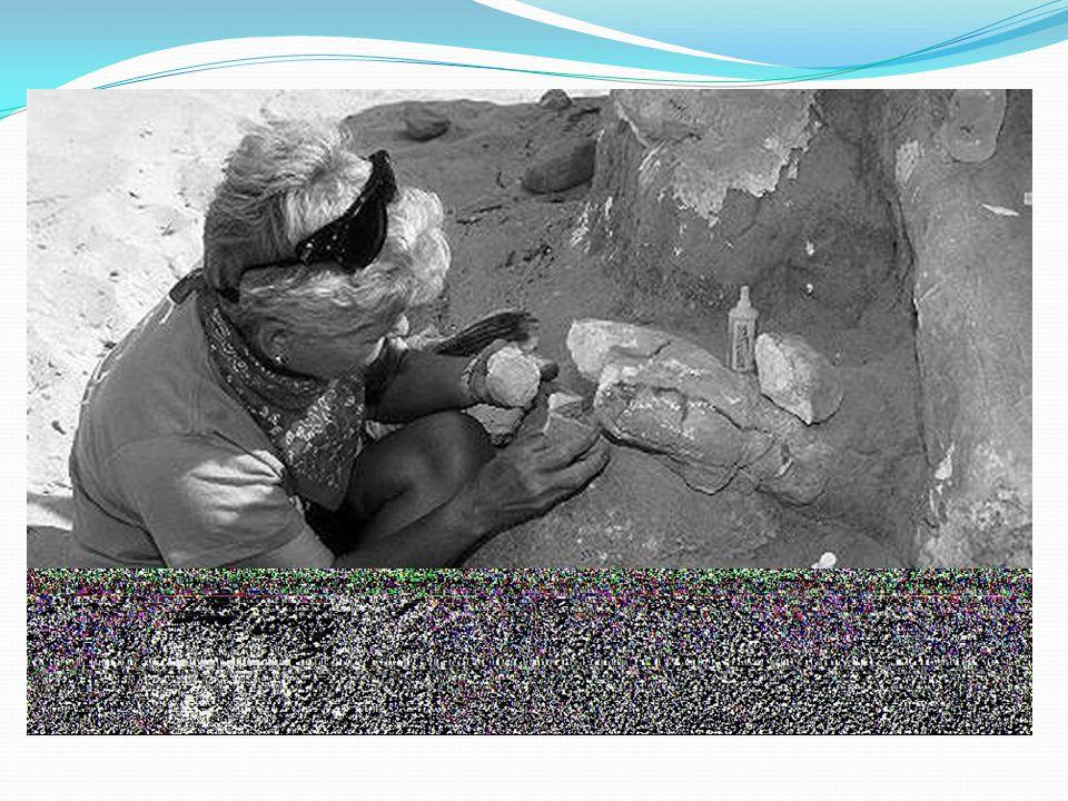 3)Manusia purba yang ditemukan di Eropa Manusia purba di Eropa disebut Homo Neandherthalensis, temukan oleh Rudolf Virchow di lembah Neandher,Dusseldorf, Jerman Barat, selain itu juga ditemukan digua Spy Belgia.