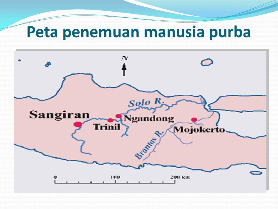 JENIS MANUSIA PURBA DI INDONESIA Meganthropus Paleojavaniscus Pithecanthropus Robustus Pithecanthropus Mojokertensis Pithecanthropus Erectus Homo Solo