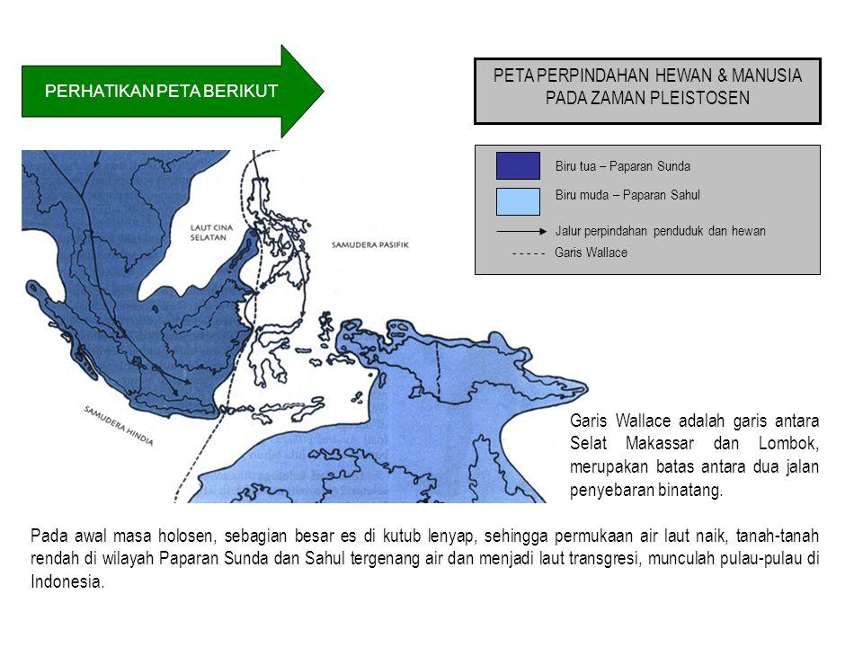 PERHATIKAN PETA BERIKUT PETA PERPINDAHAN HEWAN & MANUSIA PADA ZAMAN PLEISTOSEN Biru tua – Paparan Sunda Biru muda – Paparan Sahul - - - - - Garis Wallace Jalur perpindahan penduduk dan hewan Pada awal masa holosen, sebagian besar es di kutub lenyap, sehingga permukaan air laut naik, tanah-tanah rendah di wilayah Paparan Sunda dan Sahul tergenang air dan menjadi laut transgresi, munculah pulau-pulau di Indonesia.