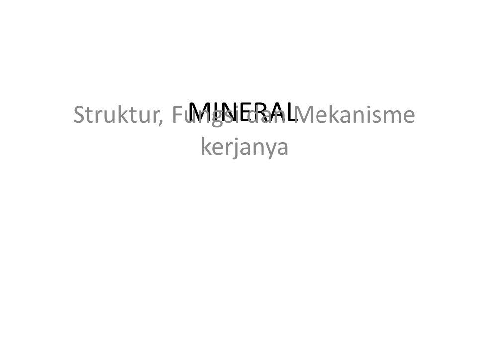 MINERAL Struktur, Fungsi dan Mekanisme kerjanya