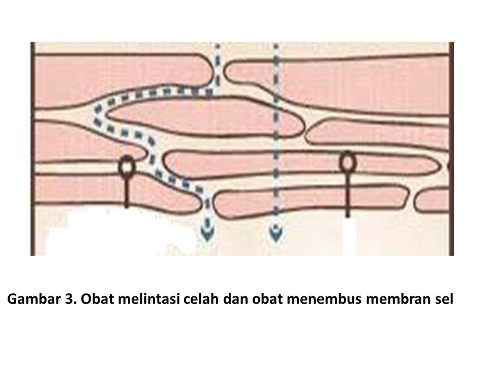 Gambar 3. Obat melintasi celah dan obat menembus membran sel