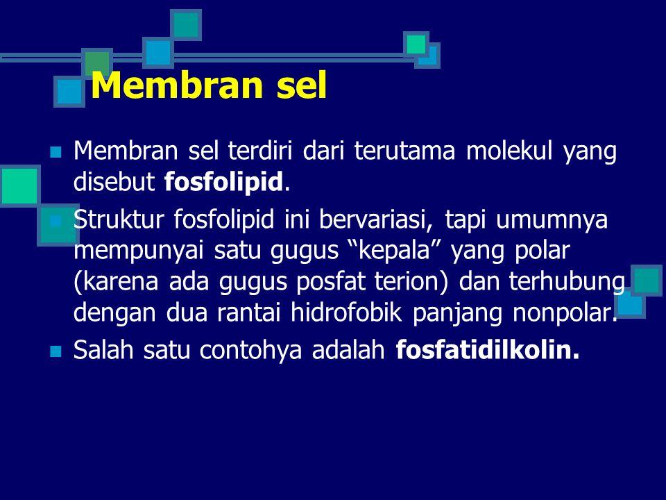 """Membran sel Membran sel terdiri dari terutama molekul yang disebut fosfolipid. Struktur fosfolipid ini bervariasi, tapi umumnya mempunyai satu gugus """""""