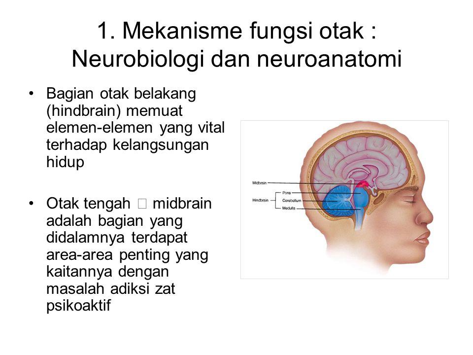 Area-area tersebut terlibat dalam motivasi dan pembelajaran mengenai rangsangan lingkungan dan perilaku penguat yang berkaitan dengan pusat kesenangan atau kenikmatan termasuk makan-minum Otak bagian depan (forebrain) mempunyai fungsi yang lebih kompleks.