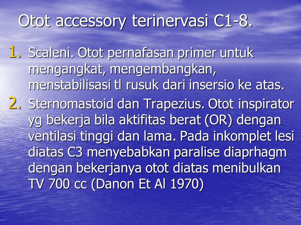 Otot accessory terinervasi C1-8. 1. Scaleni. Otot pernafasan primer untuk mengangkat, mengembangkan, menstabilisasi tl rusuk dari insersio ke atas. 2.