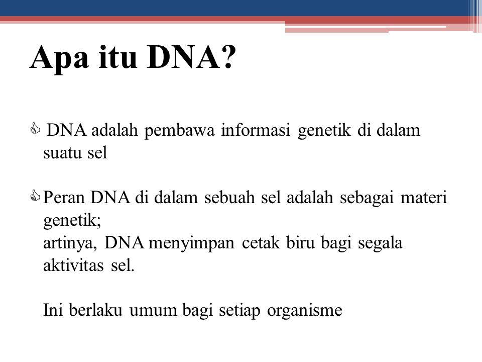 Apa itu DNA?  DNA adalah pembawa informasi genetik di dalam suatu sel  Peran DNA di dalam sebuah sel adalah sebagai materi genetik; artinya, DNA men