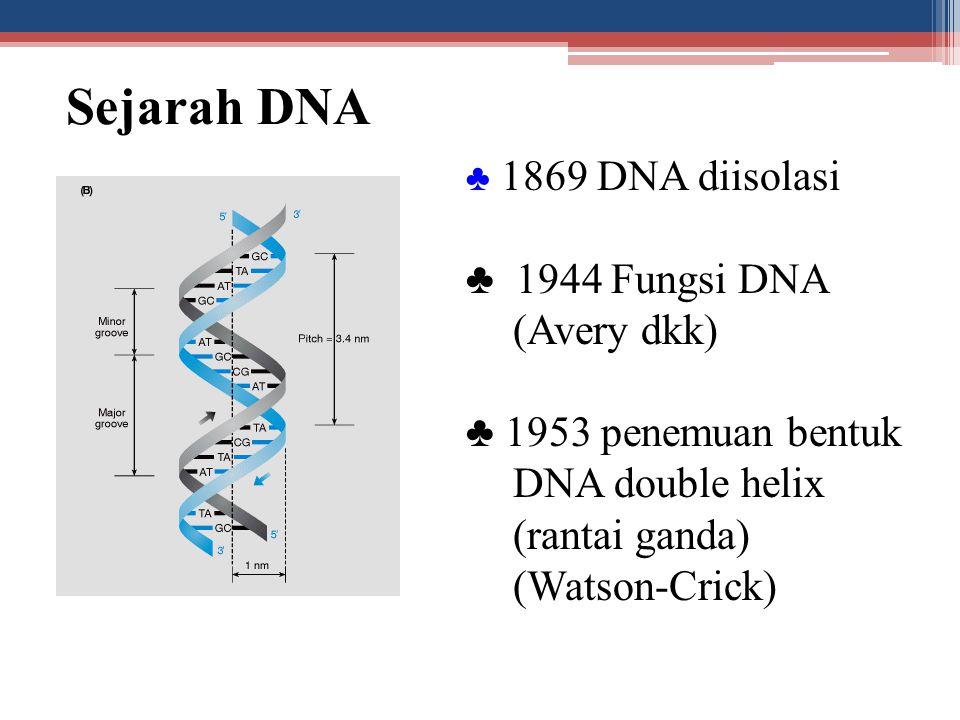 Sejarah DNA ♣ 1869 DNA diisolasi ♣ 1944 Fungsi DNA (Avery dkk) ♣ 1953 penemuan bentuk DNA double helix (rantai ganda) (Watson-Crick)