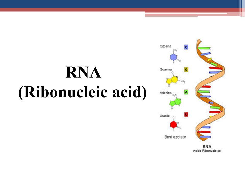 RNA (Ribonucleic acid)