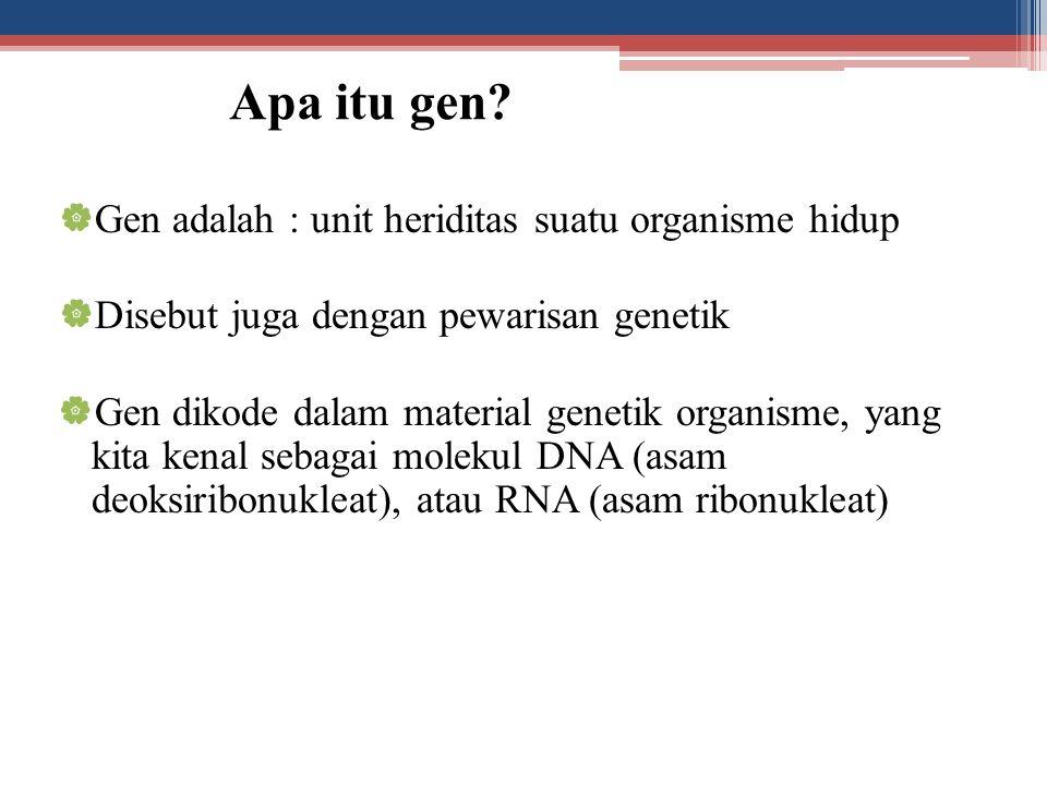 Apa itu gen?  Gen adalah : unit heriditas suatu organisme hidup  Disebut juga dengan pewarisan genetik  Gen dikode dalam material genetik organisme