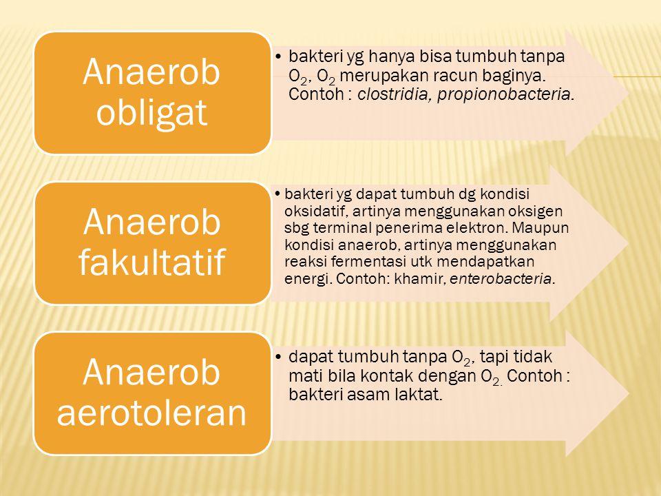 bakteri yg hanya bisa tumbuh tanpa O2, O2 merupakan racun baginya. Contoh : clostridia, propionobacteria. Anaerob obligat bakteri yg dapat tumbuh dg k