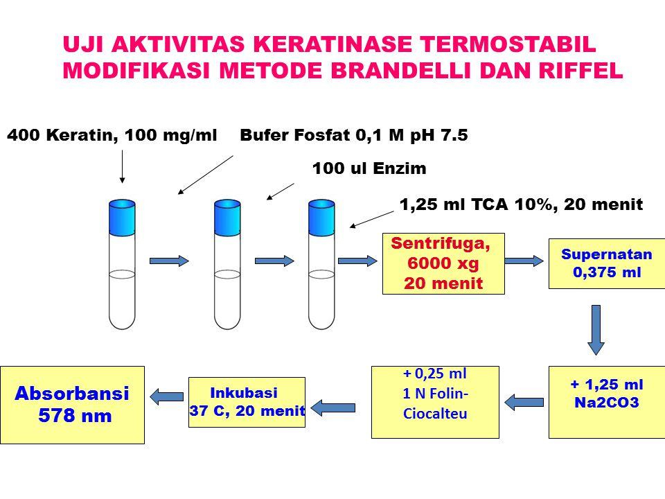 UJI AKTIVITAS KERATINASE TERMOSTABIL MODIFIKASI METODE BRANDELLI DAN RIFFEL 400 Keratin, 100 mg/mlBufer Fosfat 0,1 M pH 7.5 100 ul Enzim 1,25 ml TCA 1