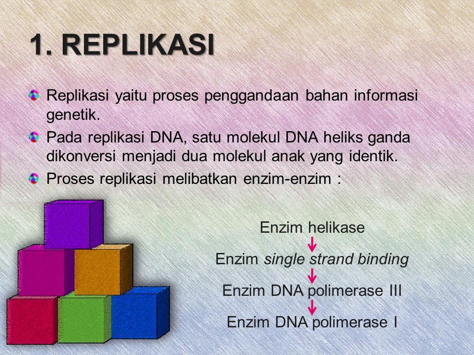 1.REPLIKASI Replikasi yaitu proses penggandaan bahan informasi genetik.