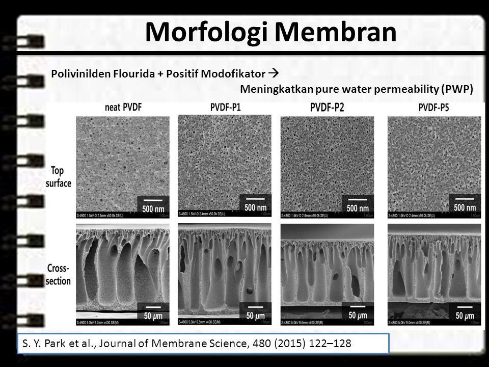 Morfologi Membran S.Y.