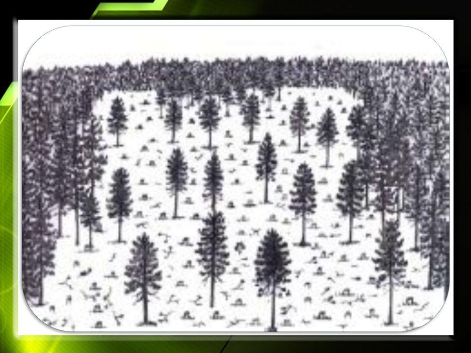 Free Powerpoint TemplatesPage 9 Pengertian Sistem Pohon Induk dan Sistem Pohon Penaung Sistem pohon induk adalah suatu sistem silvikultur dengan membiarakan beberapa pohon berdiri sendiri atau dalam kelompok untuk menghasilkan benih untuk regenerasi, sistem ini disebut juga sebagai sistem bibit pohon.