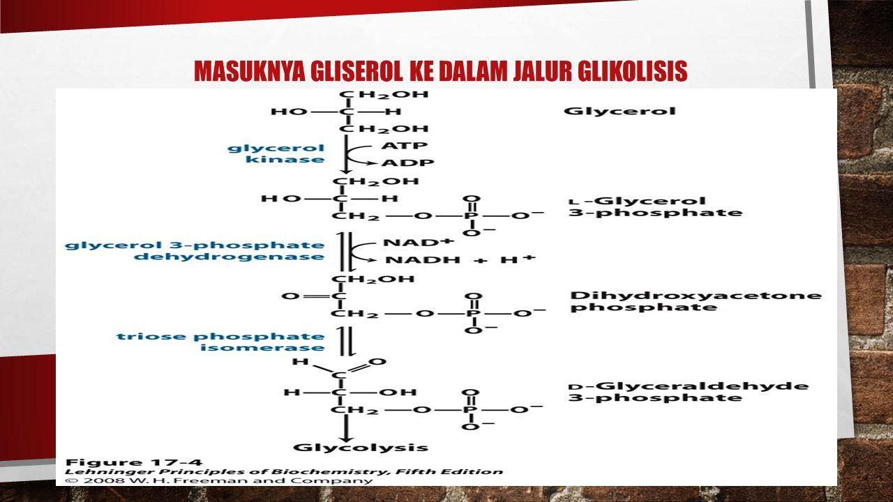 MASUKNYA GLISEROL KE DALAM JALUR GLIKOLISIS