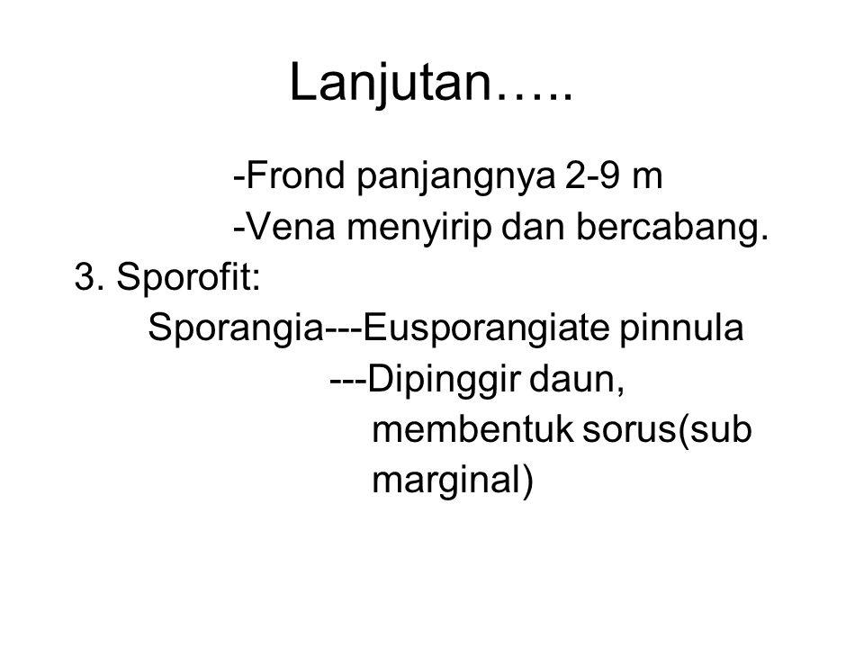 Lanjutan….. -Frond panjangnya 2-9 m -Vena menyirip dan bercabang. 3. Sporofit: Sporangia---Eusporangiate pinnula ---Dipinggir daun, membentuk sorus(su