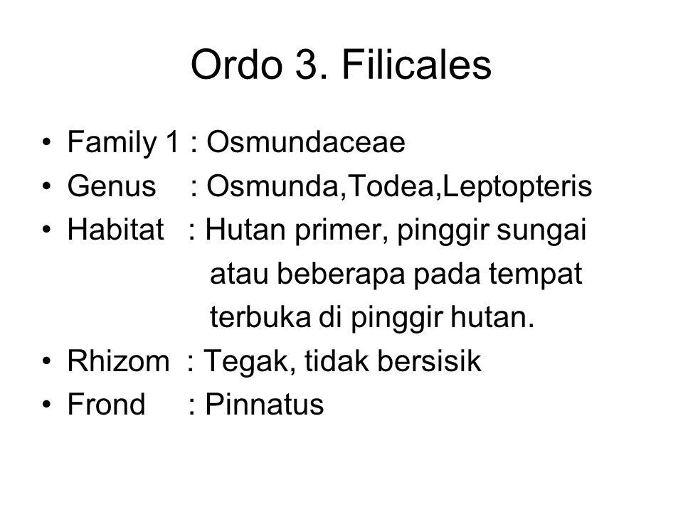 Ordo 3. Filicales Family 1 : Osmundaceae Genus : Osmunda,Todea,Leptopteris Habitat : Hutan primer, pinggir sungai atau beberapa pada tempat terbuka di