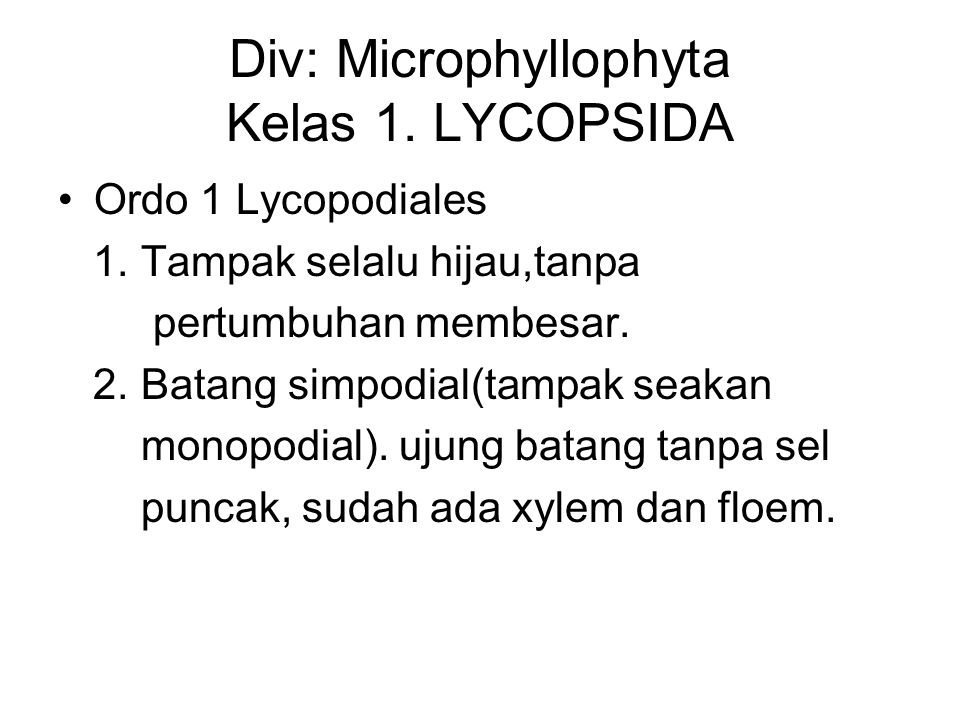 Div: Microphyllophyta Kelas 1. LYCOPSIDA Ordo 1 Lycopodiales 1. Tampak selalu hijau,tanpa pertumbuhan membesar. 2. Batang simpodial(tampak seakan mono