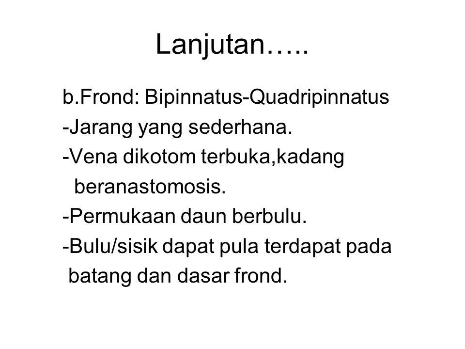 Lanjutan….. b.Frond: Bipinnatus-Quadripinnatus -Jarang yang sederhana. -Vena dikotom terbuka,kadang beranastomosis. -Permukaan daun berbulu. -Bulu/sis