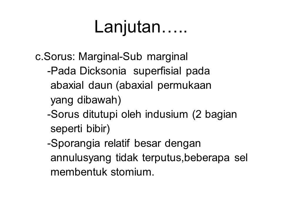 Lanjutan….. c.Sorus: Marginal-Sub marginal -Pada Dicksonia superfisial pada abaxial daun (abaxial permukaan yang dibawah) -Sorus ditutupi oleh indusiu