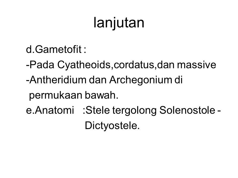 lanjutan d.Gametofit : -Pada Cyatheoids,cordatus,dan massive -Antheridium dan Archegonium di permukaan bawah. e.Anatomi :Stele tergolong Solenostole -