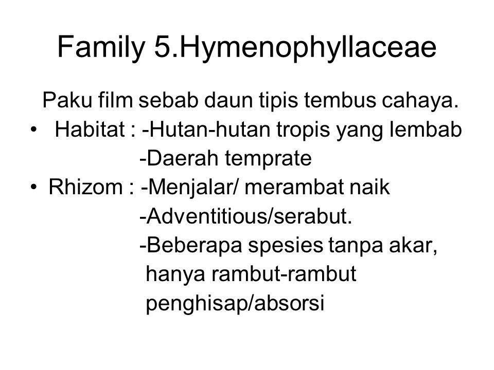 Family 5.Hymenophyllaceae Paku film sebab daun tipis tembus cahaya. Habitat : -Hutan-hutan tropis yang lembab -Daerah temprate Rhizom : -Menjalar/ mer