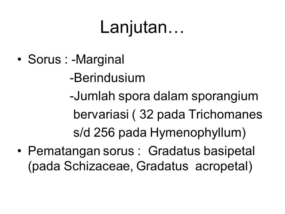 Lanjutan… Sorus : -Marginal -Berindusium -Jumlah spora dalam sporangium bervariasi ( 32 pada Trichomanes s/d 256 pada Hymenophyllum) Pematangan sorus