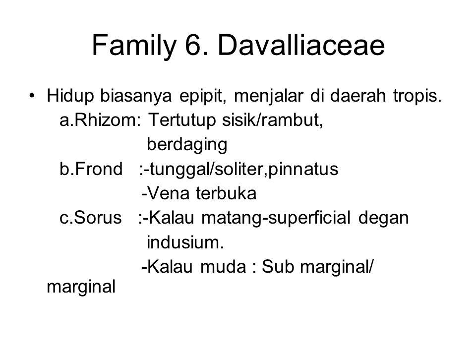 Family 6. Davalliaceae Hidup biasanya epipit, menjalar di daerah tropis. a.Rhizom: Tertutup sisik/rambut, berdaging b.Frond :-tunggal/soliter,pinnatus