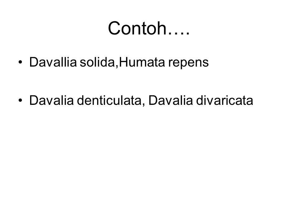 Contoh…. Davallia solida,Humata repens Davalia denticulata, Davalia divaricata
