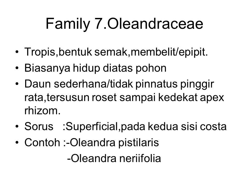 Family 7.Oleandraceae Tropis,bentuk semak,membelit/epipit. Biasanya hidup diatas pohon Daun sederhana/tidak pinnatus pinggir rata,tersusun roset sampa