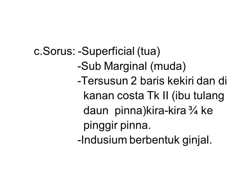 c.Sorus: -Superficial (tua) -Sub Marginal (muda) -Tersusun 2 baris kekiri dan di kanan costa Tk II (ibu tulang daun pinna)kira-kira ¾ ke pinggir pinna