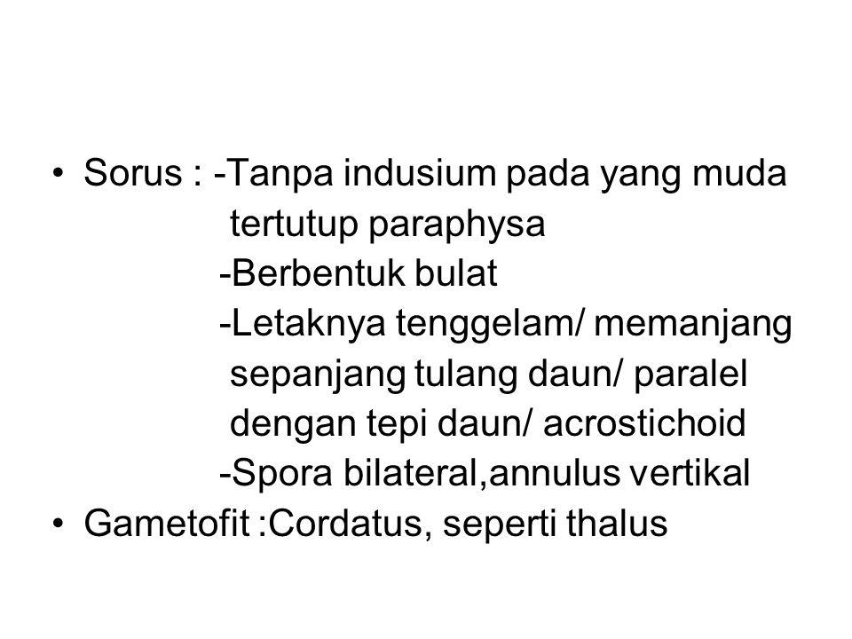 Sorus : -Tanpa indusium pada yang muda tertutup paraphysa -Berbentuk bulat -Letaknya tenggelam/ memanjang sepanjang tulang daun/ paralel dengan tepi d