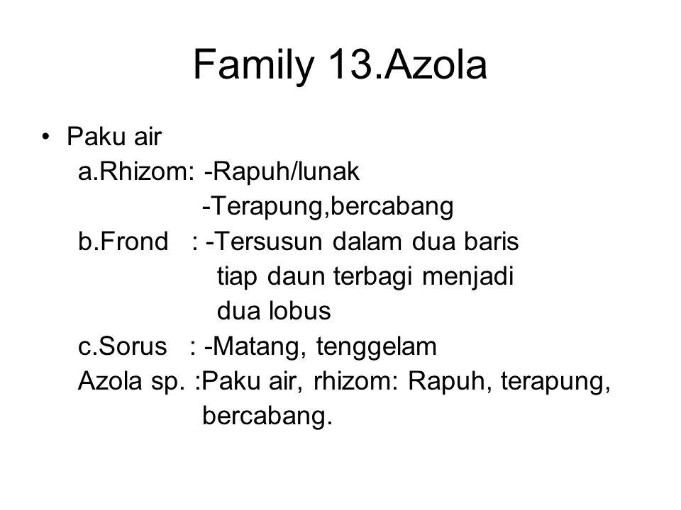 Family 13.Azola Paku air a.Rhizom: -Rapuh/lunak -Terapung,bercabang b.Frond : -Tersusun dalam dua baris tiap daun terbagi menjadi dua lobus c.Sorus :