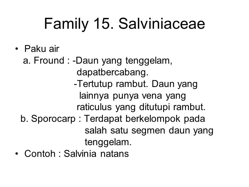Family 15. Salviniaceae Paku air a. Fround : -Daun yang tenggelam, dapatbercabang. -Tertutup rambut. Daun yang lainnya punya vena yang raticulus yang