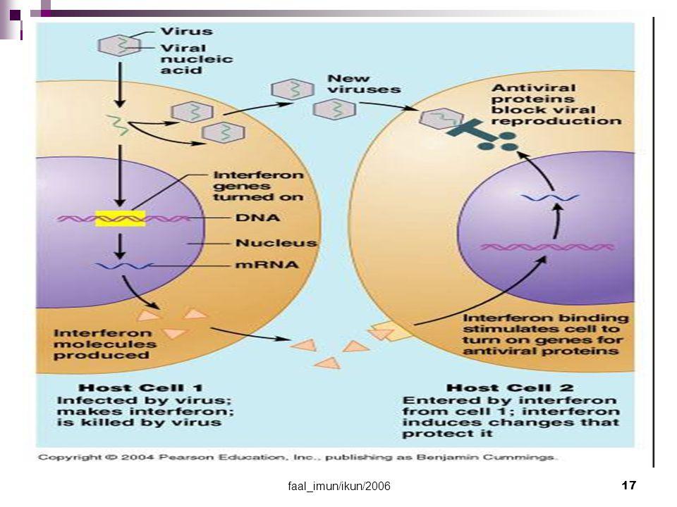 faal_imun/ikun/2006 18 Sel Natural Killer (NK) Merusak sel yg terinfeksi virus & sel kanker dengan melisiskan membran sel pd paparan I Kerjanya = sel T sitotoksik, ttp lebih cepat, non- spesifik, & bekerja sebelum sel T sitotoksik mnjd lebih banyak & berfungsi